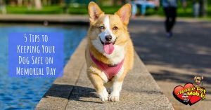 5 Tips To Keeping Your Dog Safe On Memorial Day